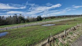 Campo idílico em Nova Zelândia Fotos de Stock