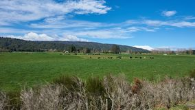 Campo idílico em Nova Zelândia Imagens de Stock Royalty Free