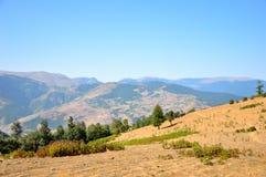 Campo il giorno di estate soleggiato della montagna Fotografia Stock