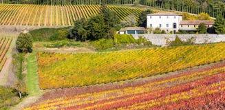 Campo ilustrado de Toscana - viñedos en la región de Chianti adentro foto de archivo