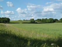 Campo inglés en el verano (5) Imagen de archivo libre de regalías