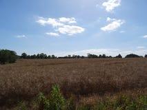 Campo inglese degli agricoltori della campagna con i raccolti Fotografia Stock Libera da Diritti