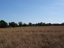 Campo inglese degli agricoltori della campagna con i raccolti Fotografia Stock