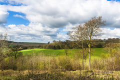 Campo inglês na primavera Hertfordshire, Reino Unido Fotografia de Stock