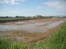 Campo innaffiato tramite irrigazione a scorrimento Fotografie Stock Libere da Diritti