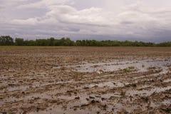 Campo inundado Imagenes de archivo