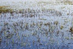 Campo inundado foto de stock