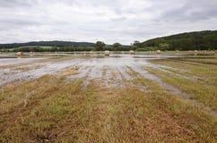 Campo inundado imagens de stock