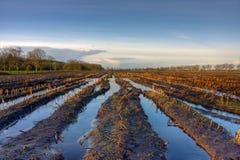 Campo inundado del maíz Fotografía de archivo