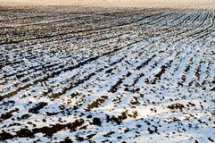 Campo in inverno Fotografie Stock Libere da Diritti