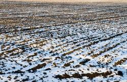 Campo in inverno Immagine Stock Libera da Diritti