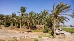 Campo iraquí Imagen de archivo