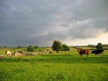 Campo irlandés Fotografía de archivo libre de regalías
