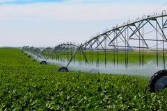 Campo irrigado del nabo Imagenes de archivo