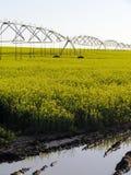 Campo irrigato di Canola Fotografia Stock