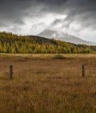 Campo in Islanda Immagine Stock Libera da Diritti
