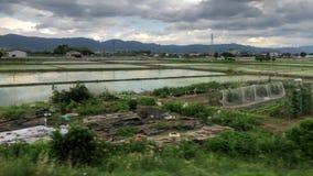 Campo japonés en Nara almacen de video
