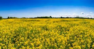 Campo Kent Southern England Reino Unido da colza de verão imagem de stock royalty free