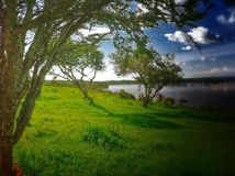 Campo. Lago y naturalez royalty free stock photo