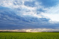 Campo largo no por do sol fotografia de stock