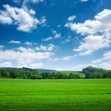 Campo largo verde con gli alberi sull'orizzonte Fotografia Stock