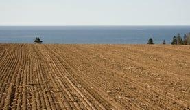 Campo lavorato dall'oceano fotografia stock