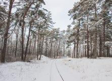 Campo letão Estrada de ferro bonita do calibre estreito do inverno através dos pinhos nevado Fotos de Stock Royalty Free