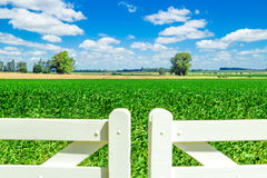 Campo lindo sobre a porta branca da cerca de piquete Fotos de Stock Royalty Free