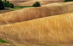 Campo linea collinosa pittoresca Fotografia Stock