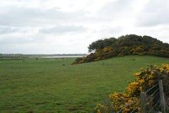Campo litoral Imagens de Stock Royalty Free