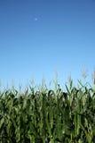 Campo, luna e cielo di cereale Fotografia Stock Libera da Diritti