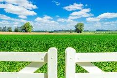 Campo magnífico sobre la puerta blanca de la valla de estacas Fotos de archivo libres de regalías