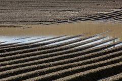 Campo marrón del suelo del fango de la agricultura en una inundación del agua Imagen de archivo