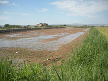 Campo molhado pela irrigação da inundação fotografia de stock