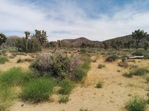 Campo, montagne, alberi di Joshua e cielo Fotografia Stock Libera da Diritti