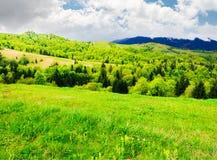 Campo montanhoso bonito na primavera imagem de stock royalty free
