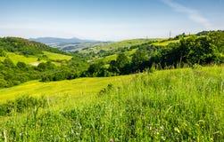 Campo montanhoso bonito no verão foto de stock