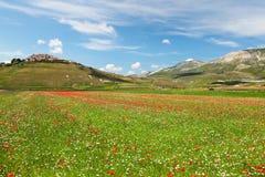 Campo montanhoso de le Marche, Italy imagem de stock royalty free