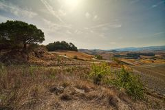 Campo montanhoso em Toscânia foto de stock royalty free