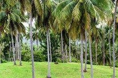 Campo montanhoso ensolarado verde com fundo alto das palmeiras imagens de stock