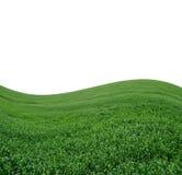 Campo montanhoso verde bonito no branco fotos de stock