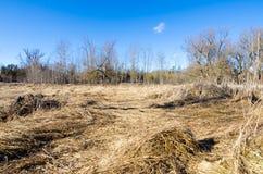 Campo morto nell'inverno Fotografie Stock