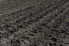 Campo não semeado arado Imagem de Stock