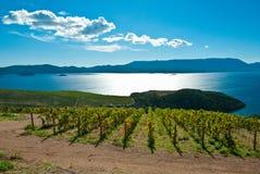 Campo na Croácia, área da uva no monte que vai para baixo ao mar Imagem de Stock