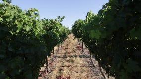 Campo Napa Valley del viñedo metrajes
