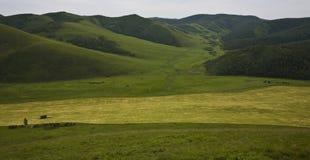 Campo nas montanhas Imagens de Stock Royalty Free