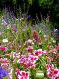 Campo naturale invaso con i fiori fotografie stock
