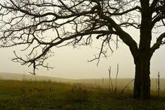 Campo nebbioso di un albero. Fotografia Stock Libera da Diritti