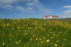 Campo nell'area di Myrar, Islanda Fotografie Stock Libere da Diritti