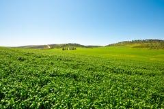 Campo nell'Israele Fotografia Stock Libera da Diritti